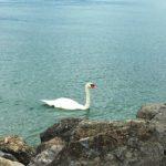 レマン湖畔